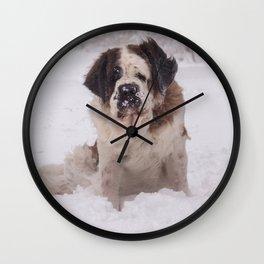 St Bernard dog on the snow Wall Clock