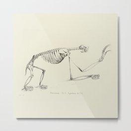 Sloth Skeleton Metal Print