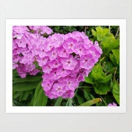 Bundle Flowers Art Print