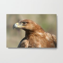 Tawny Eagle Profile Metal Print