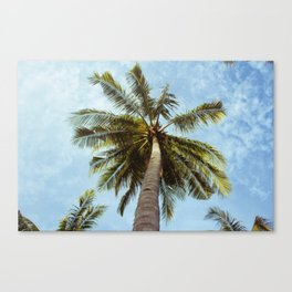 Miami Palm Trees Canvas Print
