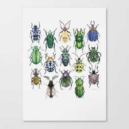 Colourful Bugs Canvas Print