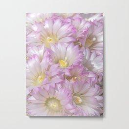 Soft Cactus Blossoms, Desert Floral Art by Murray Bolesta Metal Print