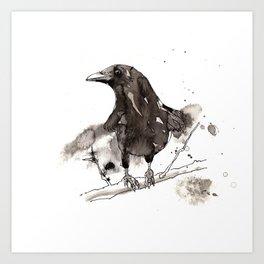 Blackcrow Art Print