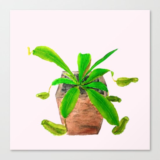 tropical pitcher plant watercolor painting Canvas Print