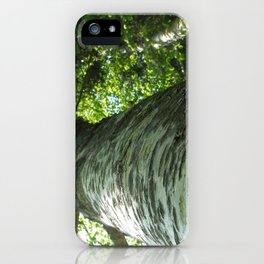 Sacred Birch by Mandy Ramsey, Haines, AK iPhone Case
