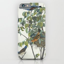 Blue Grosbeak from Birds of America (1827) by John James Audubon etched by William Home Lizars iPhone Case