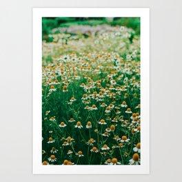 Little White Flowers in a Garden Art Print