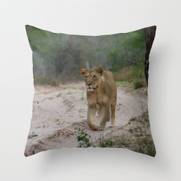 Female Lion at Tembe Elephant Park Throw Pillow