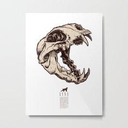 Lynx Skull Metal Print