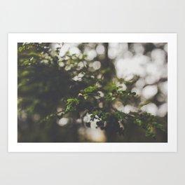 Tasmania | Cradle Mountain Leaves Art Print