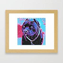 Pit Bull Models: Khan 02-03 Framed Art Print