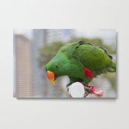 Lovely Parrot Metal Print