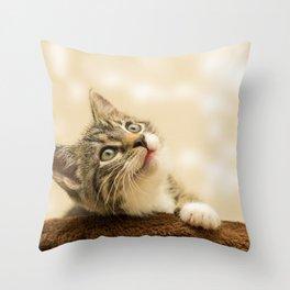 Cute Kitten! Throw Pillow