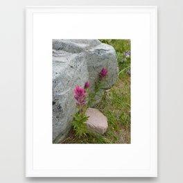 Mt. Rainier Magenta Paintbrush Flowers Framed Art Print