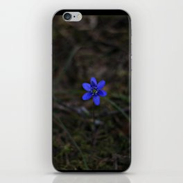 Anemone Hepatica iPhone Skin