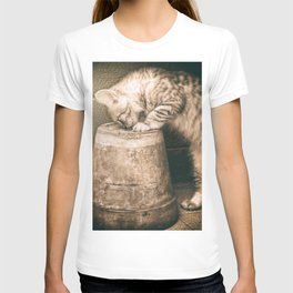 cat curiosity T-shirt