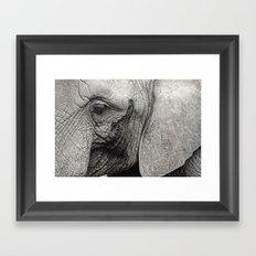 pachyderm Framed Art Print