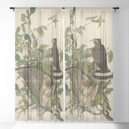 91 Broad winged Hawk Sheer Curtain