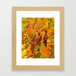 Autumn colour Framed Art Print