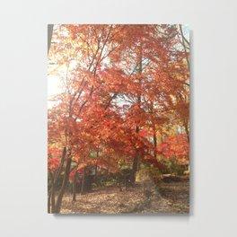 Maplewood - Fall Metal Print
