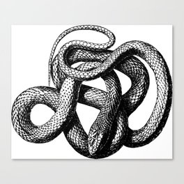 Snake | Snakes | Snake ball | Serpent | Slither | Reptile Canvas Print