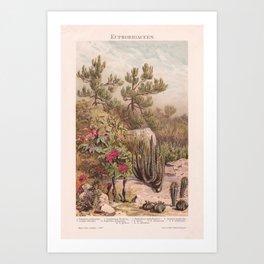 Euphorbiaceen - Cactus Art Print