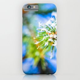 Bitter Cold, Fir Tree And Frost iPhone Case