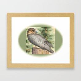 Merlin Falcon (Keir) Framed Art Print