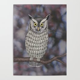 eastern screech owl on a branch Poster