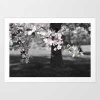 Crab Apple in Pink Art Print