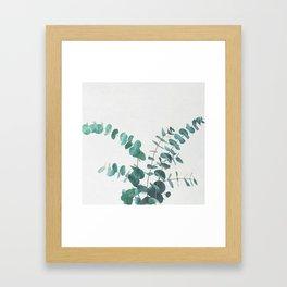 Eucalyptus II Framed Art Print