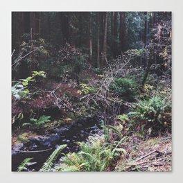 Muir Woods Creek Canvas Print