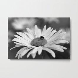 Daisy #5878 Metal Print