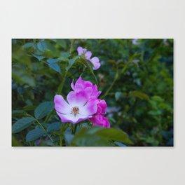 Summer pink wild flowers Canvas Print