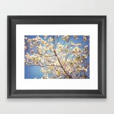 Dogwood Tree - Spring Flowering Tree Photography Framed Art Print
