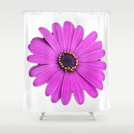 Purple Daisy Flower Shower Curtain