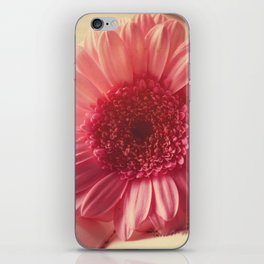 Sweet pixie pink dahlia iPhone Skin
