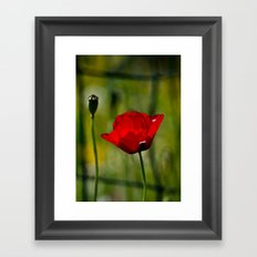 Poppy and Fence Framed Art Print