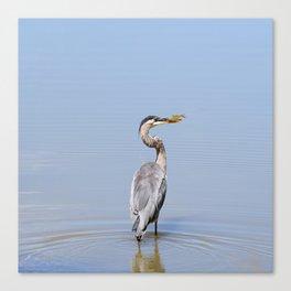 Great Blue Heron Fishing - I Canvas Print