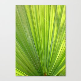Fan of Nature Canvas Print