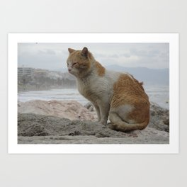 Stray Cat in Windy Weather Art Print