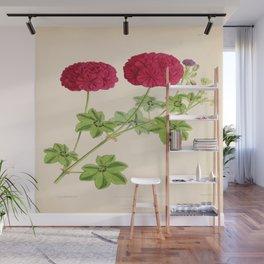 Ivy Leaved Pelargonium Wall Mural