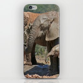 Elephants have fun with water - Africa wildlife iPhone Skin