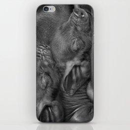 Piglets iPhone Skin