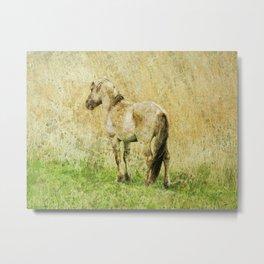 pony Metal Print