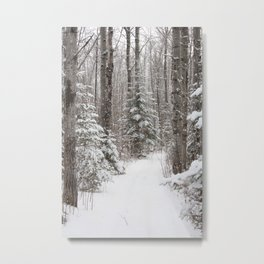 Winter Forest Metal Print