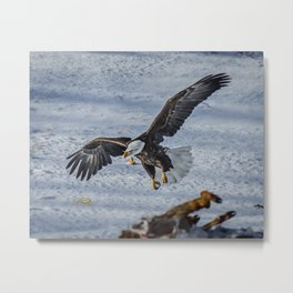 Eagle over deer Metal Print