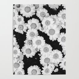 The Daisy Garden (Black and White) Poster
