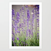 lavender Art Prints featuring Lavender by A Wandering Soul